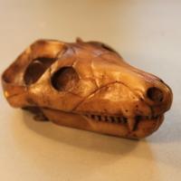 Thrinaxodon liohrinus